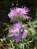Blume, französisches Riviera, Saint Tropez, Frankreich Stockfotografie