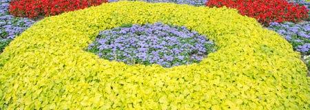 Blume-Garten Lizenzfreies Stockfoto