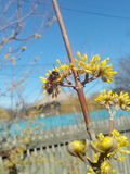 Blume, Garten Stockbilder