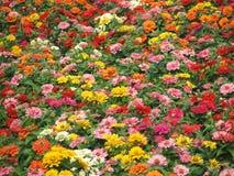 Blume-Garten Bett stockfoto