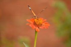 Blume gegen Schmetterling Lizenzfreie Stockbilder