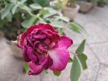 Blume gelegentlich lizenzfreie stockbilder
