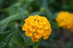 Blume gemacht durch Blumen Stockfotografie