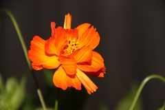 Blume gemischt mit Feuer lizenzfreie stockfotografie