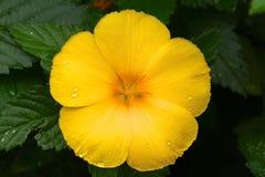 Blume Gran Canaria Stockfoto