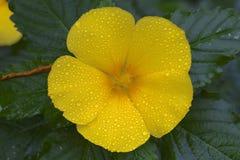 Blume Gran Canaria Stockbild