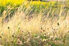 Blume/Grasblume Stockfoto