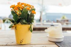 Blume am Hafen Lizenzfreies Stockfoto