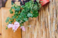 Blume am Hafen Lizenzfreies Stockbild