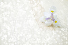 Blume helles bokeh Lizenzfreies Stockfoto