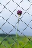 Blume hinter einem Gitter stockbilder