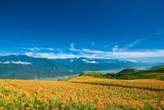 Blume im Berg mit schönem cloudscape Stockfotografie