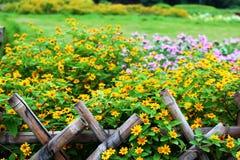 Blume im Block Stockfoto