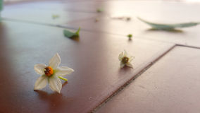 Blume im Boden Lizenzfreies Stockfoto