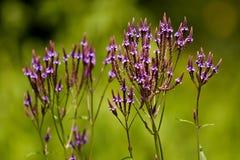Blume im botanischen Garten Stockfotos