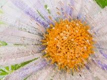 Blume im Eis Stockbilder