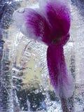 Blume im Eis Stockbild