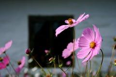 Blume im Erbepark Lizenzfreies Stockfoto
