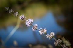 Blume im Fluss stockbild