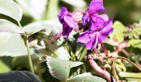 Blume im Frühjahr Stockbild