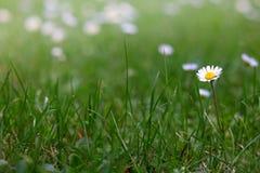 Blume im Garten stockfoto