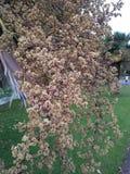 Blume im Garten Stockfotografie