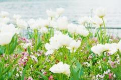 Blume im Garten. stockbilder