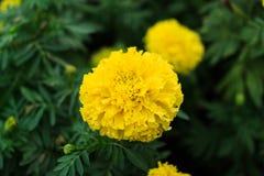 Blume im Garten Lizenzfreie Stockfotos