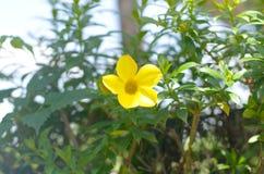 Blume im Garten Lizenzfreies Stockfoto