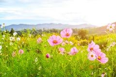 Blume im Garten Lizenzfreie Stockfotografie