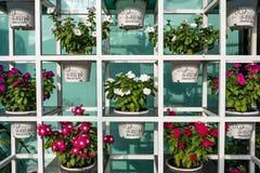 Blume im Garten Lizenzfreies Stockbild