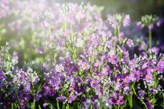 Blume im Garten Stockbilder