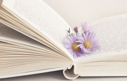 Blume im geöffneten Buch Lizenzfreie Stockfotografie