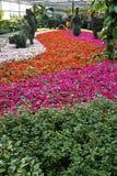 Blume im Gewächshaus. Stockfoto