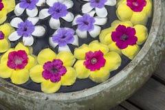 Blume im Glas Stockbilder