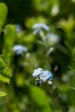 Blume im Gras Lizenzfreie Stockfotografie