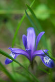 Blume im Gras Stockfotografie