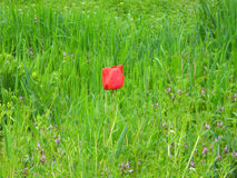 Blume im grass1 Lizenzfreies Stockfoto