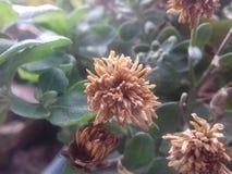 Blume im Herbst Stockbilder