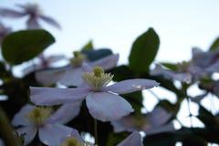 Blume im Himmel Lizenzfreie Stockfotografie