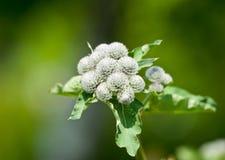 Blume im Netz stockbilder