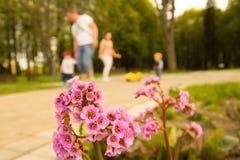 Blume im Park Lizenzfreie Stockbilder