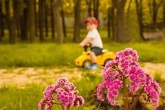Blume im Park Stockfoto
