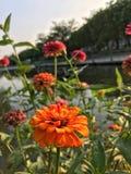 Blume im Park Lizenzfreies Stockfoto