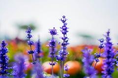 Blume im Parkland Stockfotografie