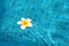 Blume im Pool Stockbilder