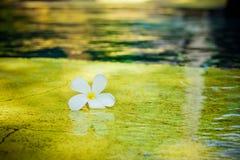 Blume im Pool lizenzfreie stockfotografie