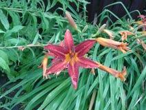 Blume im Regen Stockfotos