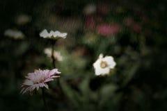 Blume im Regen Lizenzfreies Stockbild