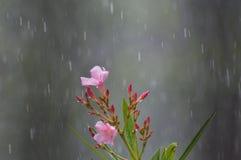 Blume im Regen stockbild
